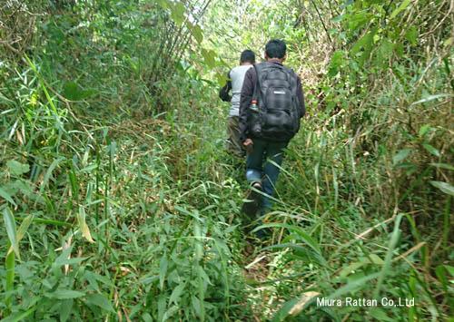 ジャングルの道なき道