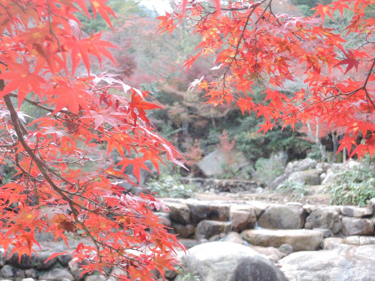 紅葉が綺麗な宮島の「紅葉谷」