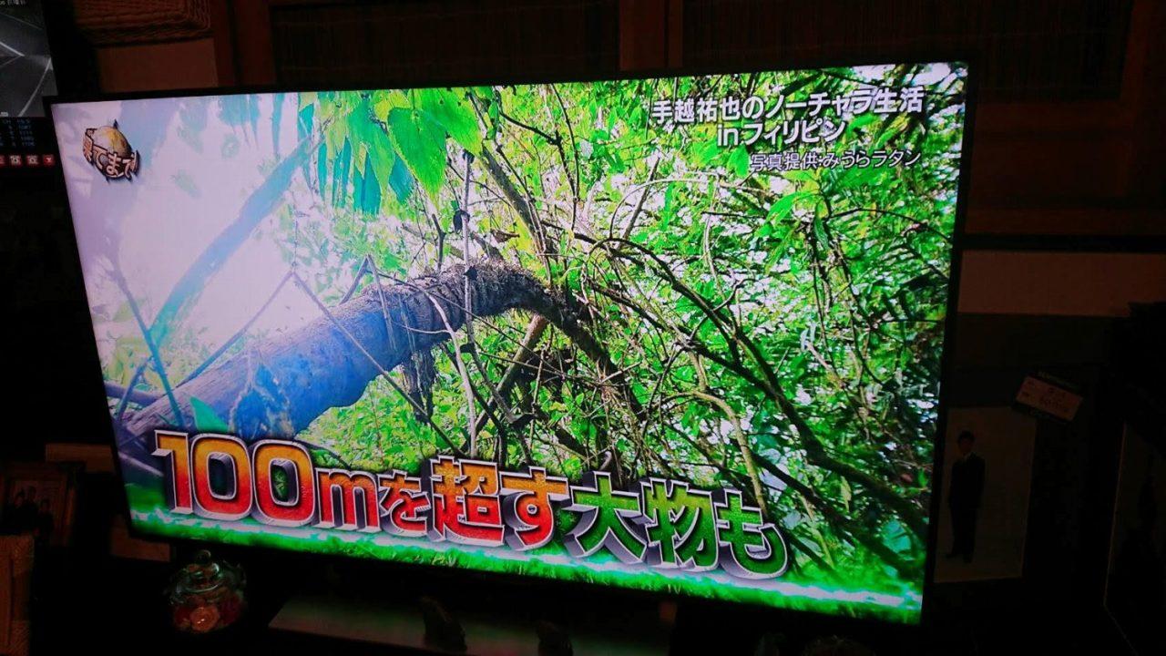 インドネシアのジャングルで撮影した籐