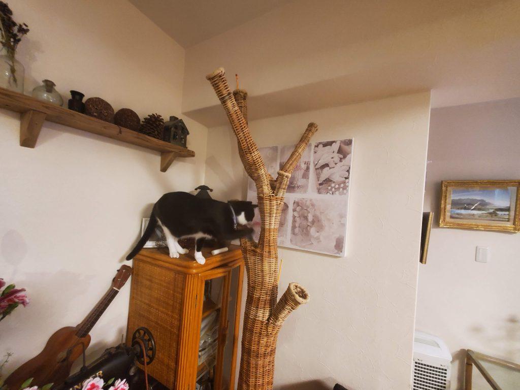 猫とラタンオブジェ